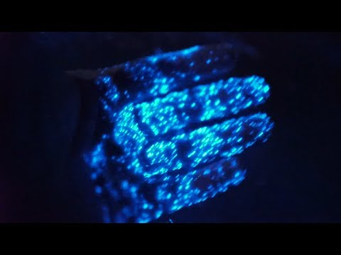 Beautiful Bioluminescence Algae Noctiluca Scintillans Youtube