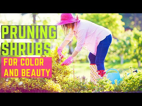 Pruning Shrubs for Color and Beauty