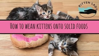 How to Wean Kittens