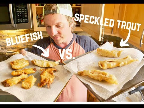 NEVER THROW BACK BLUEFISH AGAIN! Bluefish Vs Speckled Trout Catch And Cook