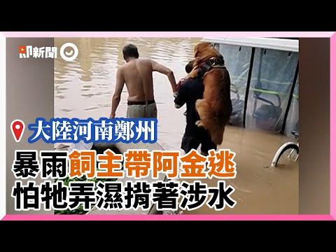 河南鄭州暴雨飼主帶黃金獵犬逃命 怕狗弄濕揹著走過泥水|寵物|阿金|天災|精選影片