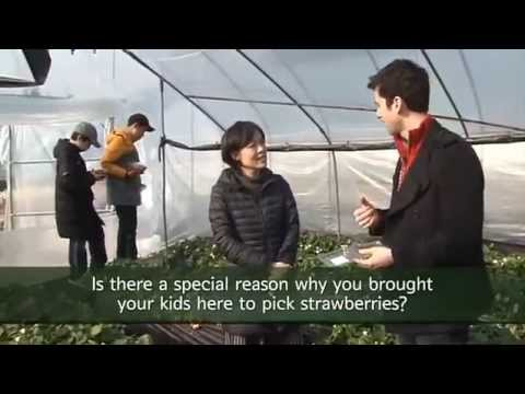 This is Korea - Strawberry Farm