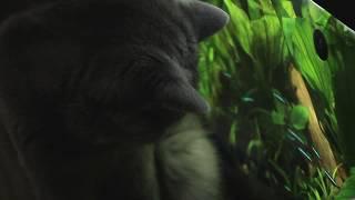 Телевизор для котиков, или Мася залипает в аквариум