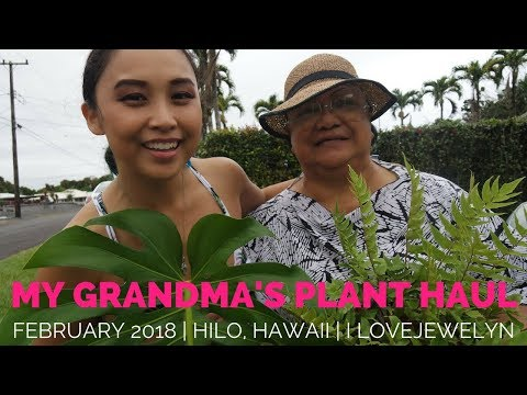 My Grandma's Plant Haul in Hawaii | February 2018 | ILOVEJEWELYN