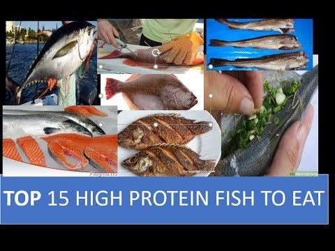 TOP 15 FISH HIGH IN PROTEIN