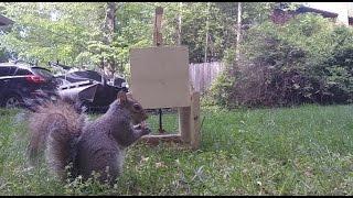 How to Make a Squirrel Trap - DIY catch alive trap