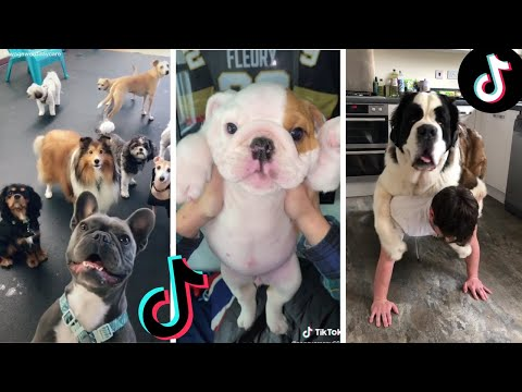 Doggos Doing Funny Things ~ Cutest Puppies of TikTok! The Dog Squad