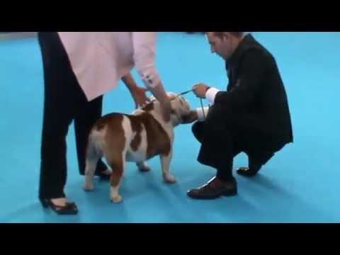 Talavera International Dog Show 2014 (05/10/14) - Juez: Sonia Saxon (UK)