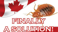 BED BUGS CANADA / NEW YORK SOLUTION! - BED BUG PRODUCT FOR SUCCESSFUL BED BUG ELIMINATION FINALLY