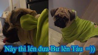 Lén đưa Chó Pug Bư lên Tàu Lửa về quê 😅 Bư nó sủa như đang ở nhà xém bị đuổi xuống😂=)) Pugk Vlog