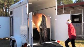 Umesläp B60 touring horse trailer