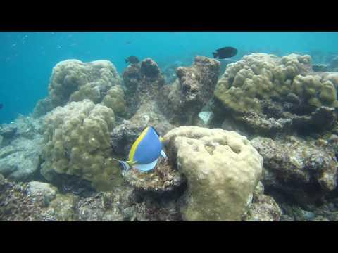 45min snorkeling @ Maldives