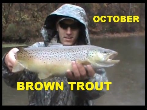 OCTOBER BROWN TROUT