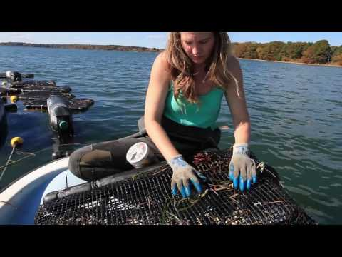 Getting Started In Shellfish And Seaweed Aquaculture