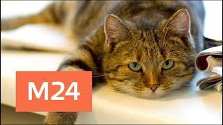 """""""Правила города"""": как содержать кошку в городе - Москва 24"""