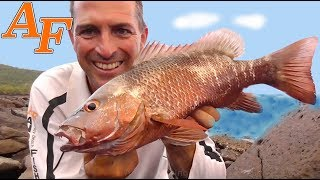 Catch and Cook Monster Mangrove Jack EP.398