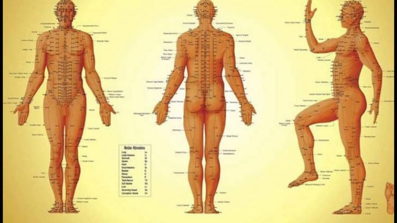 Human Body Evolution Youtube