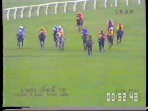 ม้าแข่ง ปี 2537