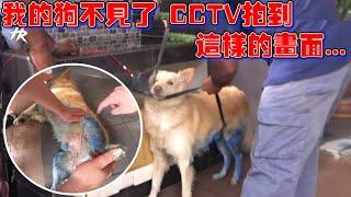 我的狗不见了...CCTV拍到这样的画面...3天真实记录...