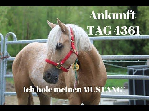 Ich treffe meinen Mustang//Abholung in Frankfurt//MUSTANG MAKEOVER 2018