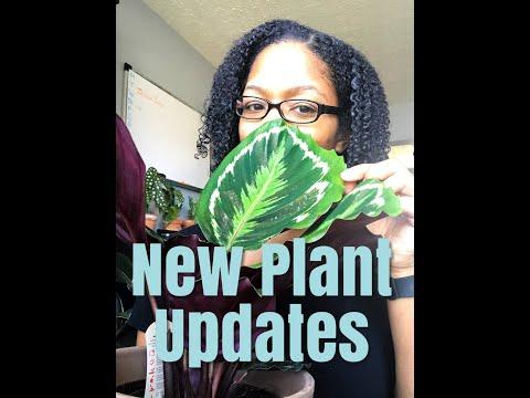 New Plant Updates