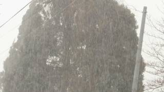 2017/2/7 細かい雪がシンシン。1℃。