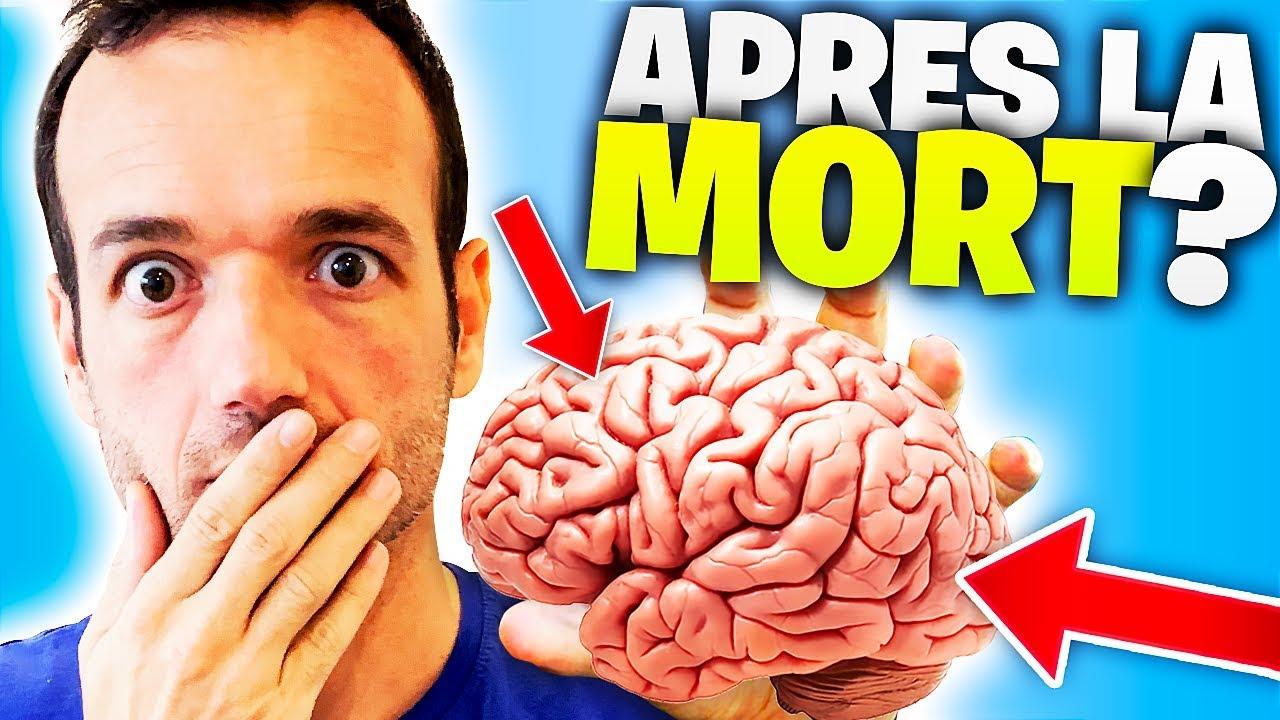 19 fun facts sur le cerveau (récentes !)