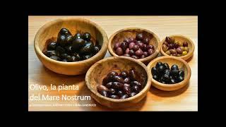 Olivo: pianta del Mare nostrum