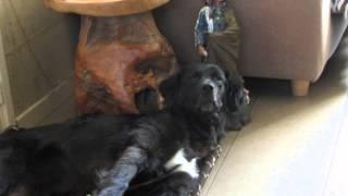 slapende honden 001
