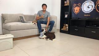 Educando un perro EN VIVO