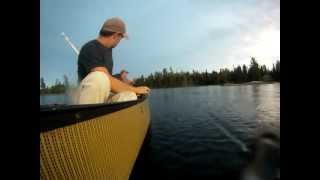 bwca fishing walleye