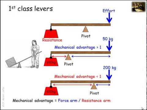 lever-systems-in-the-human-body