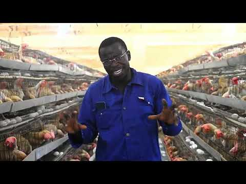 MILLIONAIRE PROFITABLE POULTRY FARM STARTING TIPS