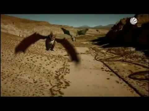 Drachen Doku