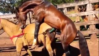 Download Video បង្កាត់ពូជសេះ សត្វពាក់Horse mating, Donkey mating & Funny horse compilation MP3 3GP MP4