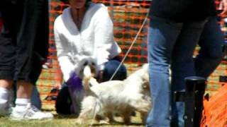 Paws In The Park - Westie Rescue Of Orange County & Beyond