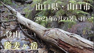 この度の山行は5名で、東川登山口より『重石』、『小麦ヶ岳』、『蕎麦ヶ岳』、そして西側の一貫野登山口へと降ります。車二台でしたので、このようなルートでのんびりと歩いて ...