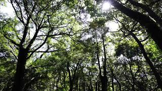 자연의소리-힐링스페셜-ASMR-쉼,sounds of n…