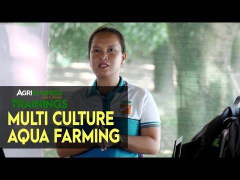 Multi Culture Aqua Farming: Tilapia, Bangus, Shrimp and Crab   Agribusiness Training
