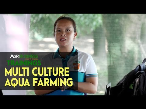 MUD CRABS, MILKFISH, SHRIMP FARMING: How To Become Successful In Raising Multi Culture Aqua Farming