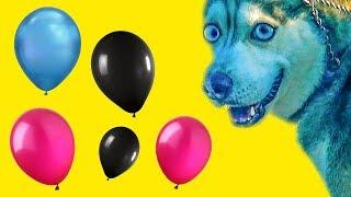 ВЫБЕРИ ПРАВИЛЬНЫЙ ШАРИК ЧТОБЫ ВЫЖИТЬ (Хаски Бандит) Говорящая собака