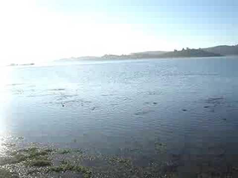 carpaz en lago peñuela