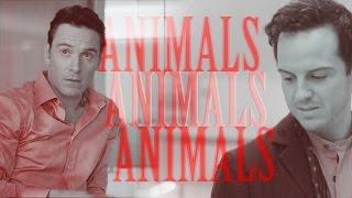 Animals | MorMor