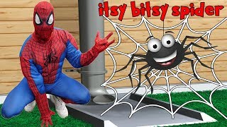 Itsy Bitsy Spider Song for Kids Sing Along Nursery Rhyme