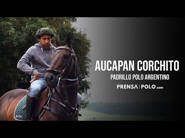 Aucapan Corchito Padrillo Polo Argentino