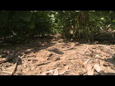 Increasing Soybean Profitability - Marion Calmer - January 17, 2014