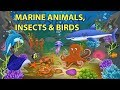 Sea Animals, Insects and Birds Names and Sounds