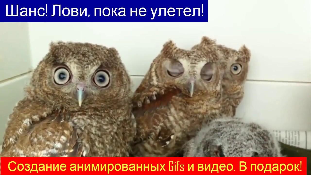 Утро понедельника совы гифка