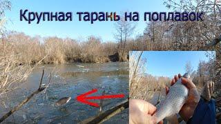 Зимняя рыбалка на поплавок в январе ОГРОМНАЯ ПЛОТВА на удочку Ломаем лёд Конкурс