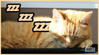 SENIOR CAT SLEEPING & SNORING // CATURDAY #4 | Mary's Test Kitchen